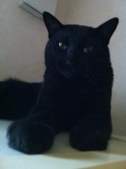 CHILL CAT 公式ブログ/HYPE!! 画像1
