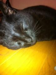 CHILL CAT 公式ブログ/うにゃー 画像1