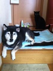 CHILL CAT 公式ブログ/犬と猫 画像1