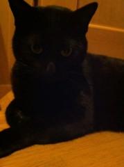 CHILL CAT 公式ブログ/うんがー!! 画像1