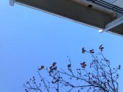 温井摩耶 公式ブログ/太陽の光。 画像1