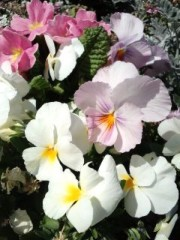 滝ありさ 公式ブログ/春〜 画像2
