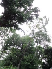 滝ありさ 公式ブログ/緑と青 画像3