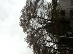 賀久涼太 公式ブログ/桜。 画像2