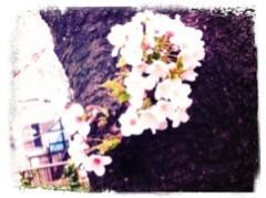 FLOWER 公式ブログ/目黒川〜。千春♪ 画像3