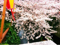 FLOWER 公式ブログ/めーぐろーがーわー。千春 画像1