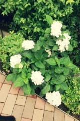 FLOWER 公式ブログ/まっしろー  杏香 画像1