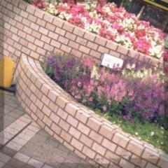 FLOWER 公式ブログ/今日は…  杏香 画像2