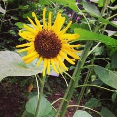 FLOWER 公式ブログ/ふぁいと!希 画像1