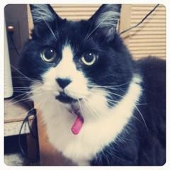 FLOWER 公式ブログ/愛猫ちゃん。れいな 画像1