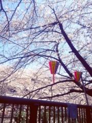 FLOWER 公式ブログ/桜。美央 画像1