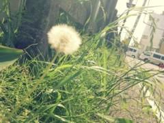 FLOWER 公式ブログ/ふわり。  千春 画像1