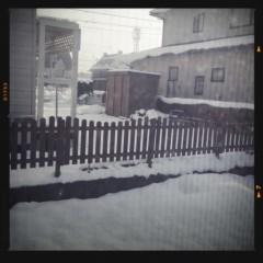 FLOWER 公式ブログ/雪さんっ!はるみ 画像1