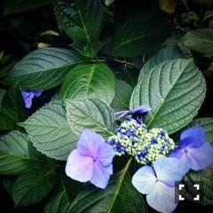 FLOWER 公式ブログ/6月だね。美央 画像1