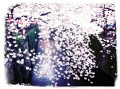 FLOWER 公式ブログ/目黒川〜。千春♪ 画像2