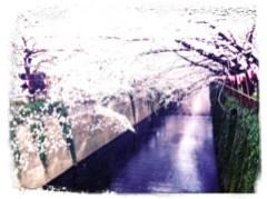 FLOWER 公式ブログ/目黒川〜。千春♪ 画像1