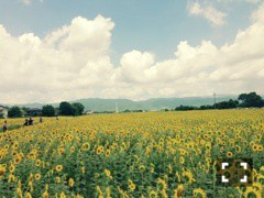 FLOWER 公式ブログ/向日葵★真波 画像1