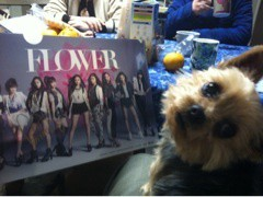 FLOWER 公式ブログ/TSUTAYAの特典。美央 画像1