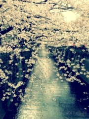 FLOWER 公式ブログ/今日★真波 画像1
