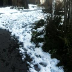 FLOWER 公式ブログ/雪が。美央 画像1