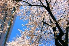 FLOWER 公式ブログ/めーぐろーがーわー。千春 画像2