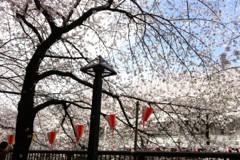 FLOWER 公式ブログ/めーぐろーがーわー第二弾!千春 画像3