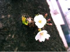 FLOWER 公式ブログ/めーぐろーがーわー。千春 画像3