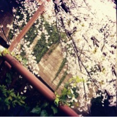 FLOWER 公式ブログ/きれいだ(^ー^)ノ 希 画像1