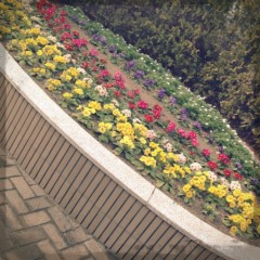 FLOWER 公式ブログ/さむーい! 杏香 画像1