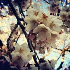 FLOWER 公式ブログ/Spring…♪ 希 画像1