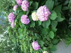 FLOWER 公式ブログ/おはな。萩花 画像1