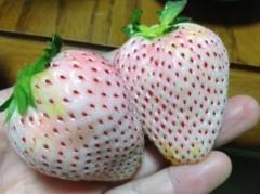 宇都宮快斗 公式ブログ/講師に白いイチゴにレッスンに! 画像2