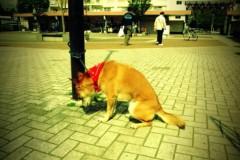 宇都宮快斗 公式ブログ/4月最後の日 画像1