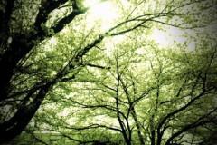 宇都宮快斗 公式ブログ/桜が綺麗だ、千秋楽だ! 画像1