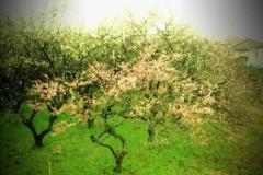 宇都宮快斗 公式ブログ/春だね! 画像1