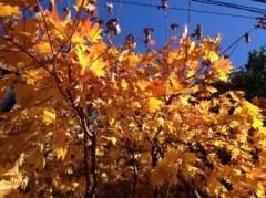 宇都宮快斗 公式ブログ/寒いけど綺麗な紅葉。 画像1