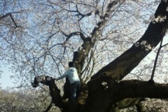宇都宮快斗 公式ブログ/新人研修、桜咲く。 画像1