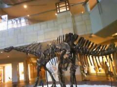 下島美来 公式ブログ/恐竜!! 画像1