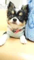 下島美来 公式ブログ/かわゆい☆チワワちゃん☆ 画像2