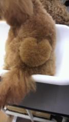 小山田みずき 公式ブログ/犬の誘拐事件にご協力お願いします! 画像3