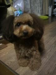 小山田みずき 公式ブログ/犬の誘拐事件にご協力お願いします! 画像1