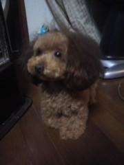 小山田みずき 公式ブログ/犬の誘拐事件にご協力お願いします! 画像2