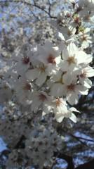 純烈 公式ブログ/お花見! 画像1