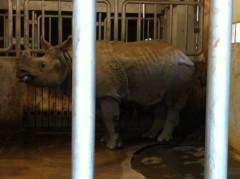 純烈 公式ブログ/マイ動物園 画像2