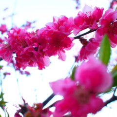石田晃久 公式ブログ/桜ももうすぐ 画像1