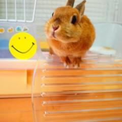 石田晃久 公式ブログ/私の朝食 画像2