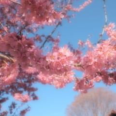 石田晃久 公式ブログ/狛江に春がきた 画像3