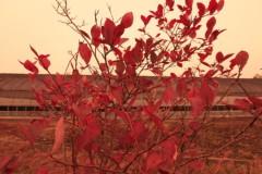 石田晃久 公式ブログ/日本の風景 画像2