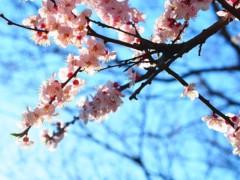 石田晃久 公式ブログ/春が来た 画像1