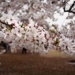 石田晃久 公式ブログ/新宿御苑 画像3